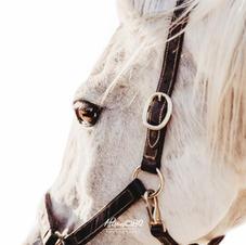 Afscheid van je paard 13