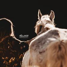 Afscheid van je paard 15