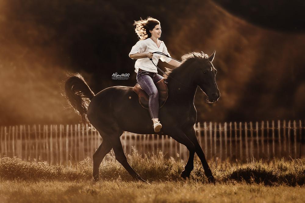 gouden uur, paardenfoto