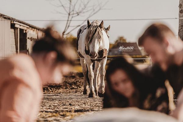 Afscheid nemen van je paard