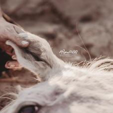 Afscheid van je paard 49