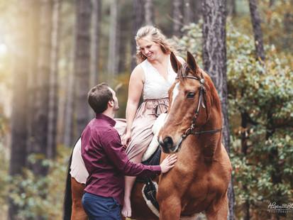 Paard in bos