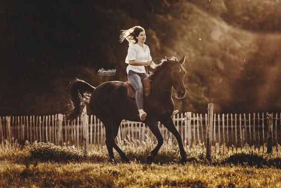 zwart paard in galop