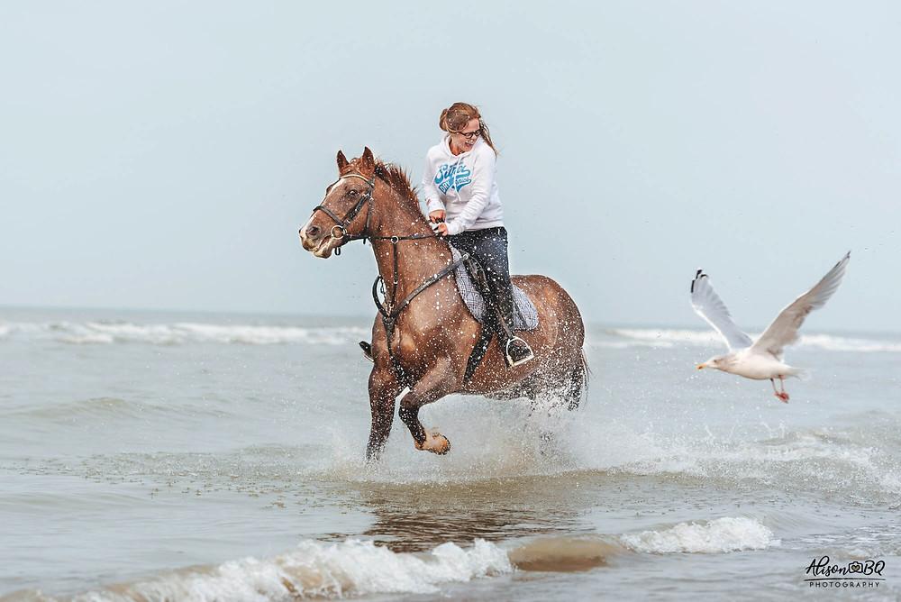 foto aan zee, paardenfotografie