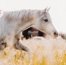 Afscheid van je paard 10