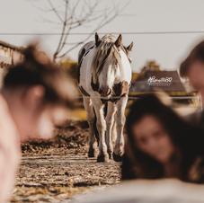Afscheid van je paard 32