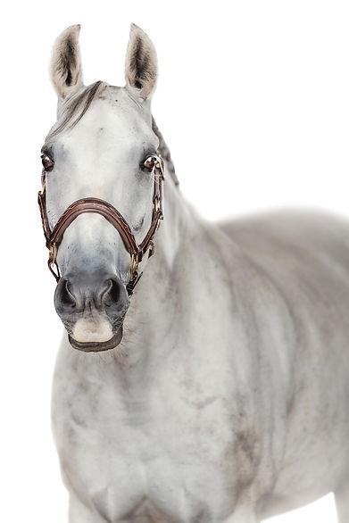 fine art paardenfoto