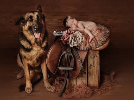 De populairste foto's van paardeneigenaren met een pasgeboren baby worden genomen bij AlisonBQ.