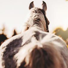 Afscheid van je paard 16