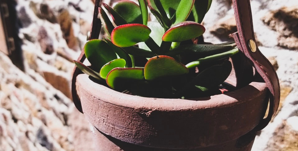 Hanging Pot Clay