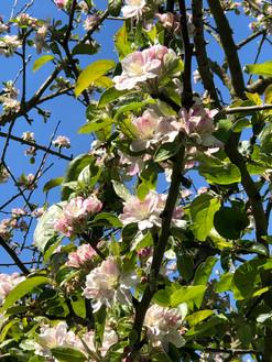 La Robeline Cider Orchard