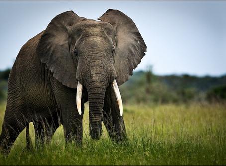 JOIN US ON THE YOGANDA TRIP 2018                                 一生一次的前往非洲腹地的珍贵机会
