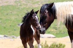 Lucy Rees - Foal and Mare
