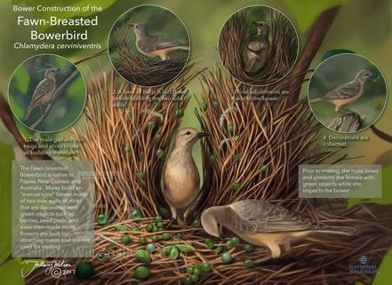 Bowerbird Smaller watermarked.jpg