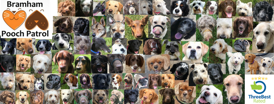 A collage of all our beloved pooches