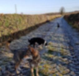 Dog Walking in Hetchell Woods