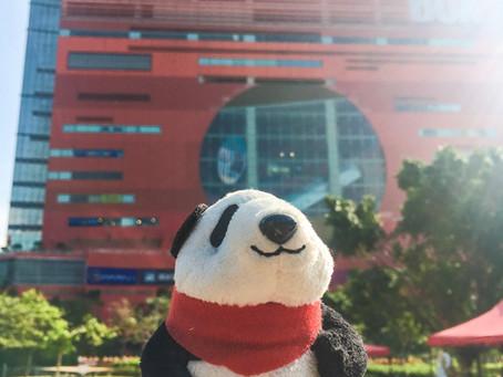 Panda in the sunny day