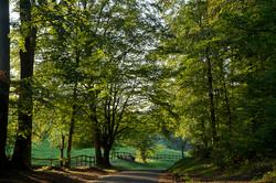 Lyons la Forêt - Eure