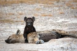 Hyène - Kenya