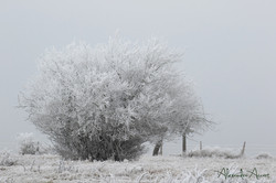 Givre normand