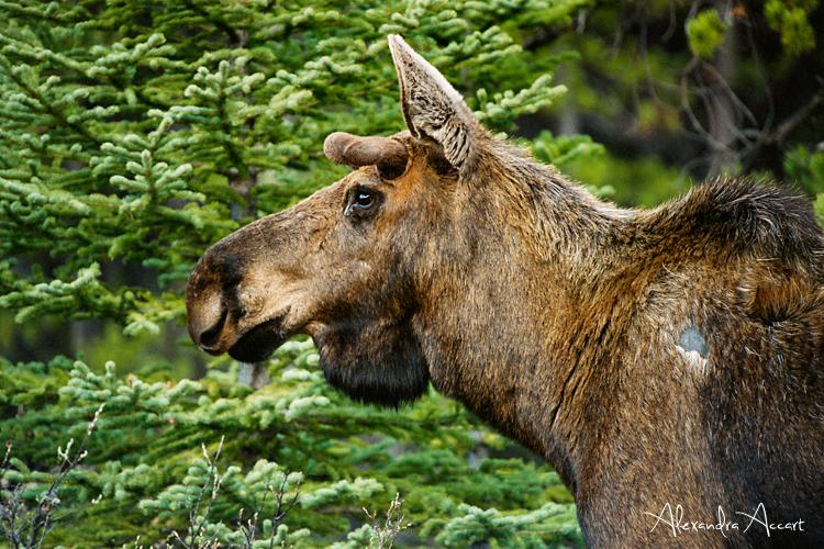 Elan - Banff, Canada