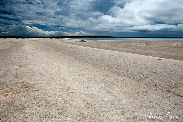 Shell Beach - Australie