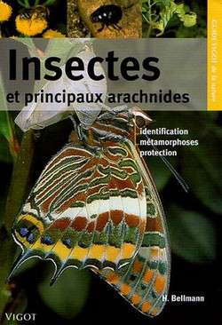 Insectes & principaux arachnides