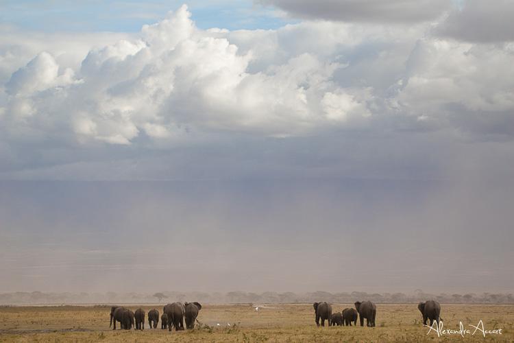 Eléphants - Kenya