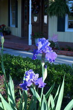 house_and_iris