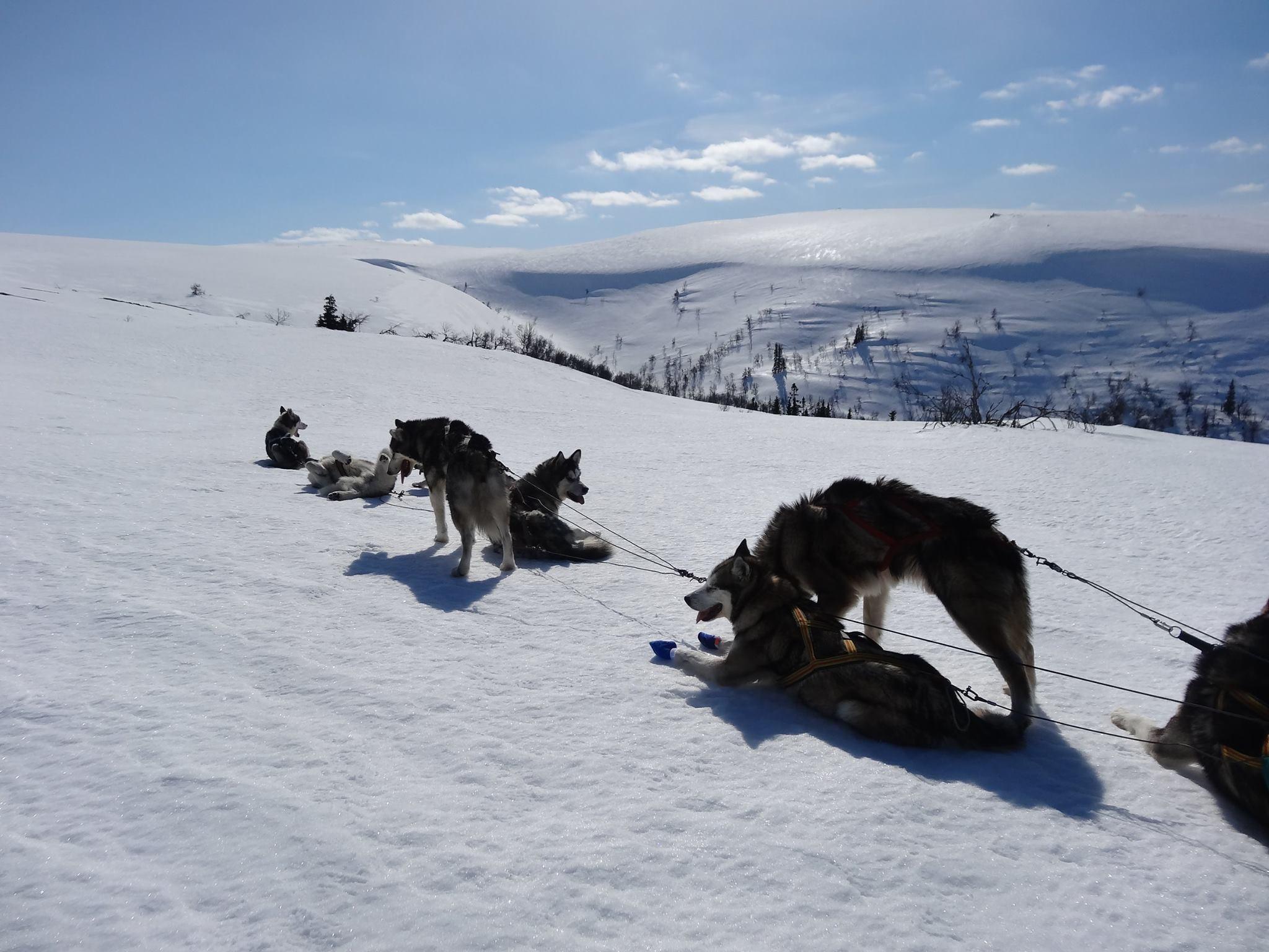 Kort paus för hundarna
