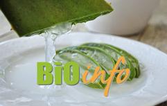 L'Aloe vera, un régénérateur, en gel ou en jus !