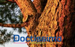 Pycnogenol® : les bienfaits de l'écorce de pin maritime
