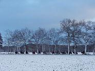 Auritt im Winter 2..jpg