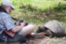 IMGP7253 Rusty curious tortoise ii.JPG