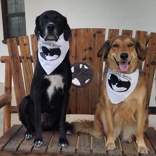 Balloo and Foxy.  Character Education Rescued Dogs