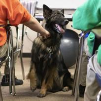 Bear.  Character Education Classroom Rescue Dog
