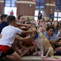 Scout.  Character Education and Social Emotional Learning Rescue Dog School Assembly