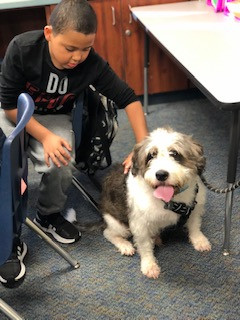Char.  Social and Emotional Learning Therapy Dog