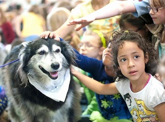 Suki.  Character Education School Assembly Rescue Dog