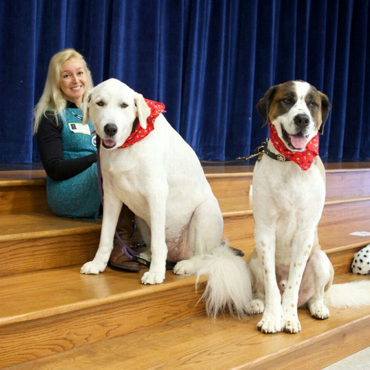 Mollie and Magnus.  Character Education Rescued Dogs at School Assembly
