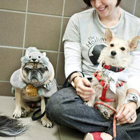 Guthrie and Jackie O. Character Education School Assembly Rescued Dogs