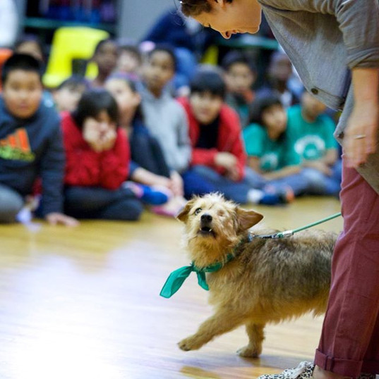 Pierre.  Social and Emotional Learning School Assembly Therapy Dog