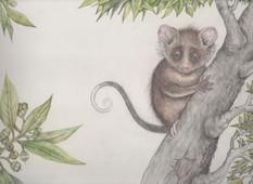 Pixie Possum by Tamara Jordan
