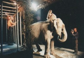 Filming the elephant & circus girl