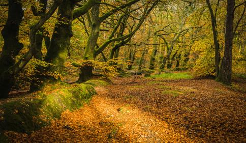Ashcombe Woods
