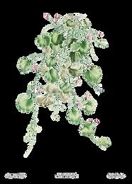 ghastly gladiolus