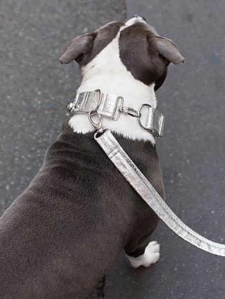 Photo d'un chien portant un collier et une laisse de la marque CHIEN-CHIEN