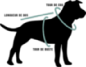 Dessin d'une silhouette de chien, avec des indications pour prendre les mesures d'un chien