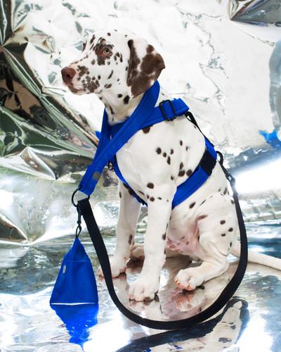 lookbook-chromatic-chien-chien-6.jpg