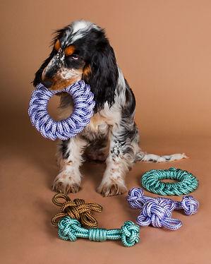 Chien de race Cocker anglais tricolore, jouant avec des jouets pour chien en paracorde tressée, fabriqués en France par la marque Chien-Chien.